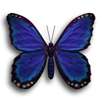 Download the Butterfly Zip file.